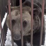 A maci 17 évig raboskodott egy szörnyen szűk ketrecben, aztán végre szabadon engedték. Leírhatatlan, amit a kamera rögzít: