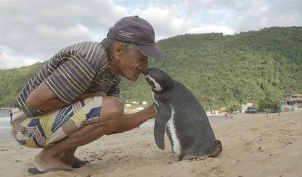 A hűséges pingvin minden évben 8000 kilométert utazik, hogy találkozzon ezzel az idős halásszal: jó oka van rá