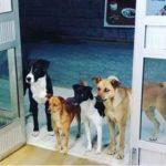A kórház ajtaja előtt megjelent egy csapat kutya: az ápolók rájöttek, nem ok nélkül vannak ott