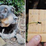 Az okos juhászkutya összeesett az ajtóban: a család egy táblát talált a nyakában, rajta fontos üzenettel