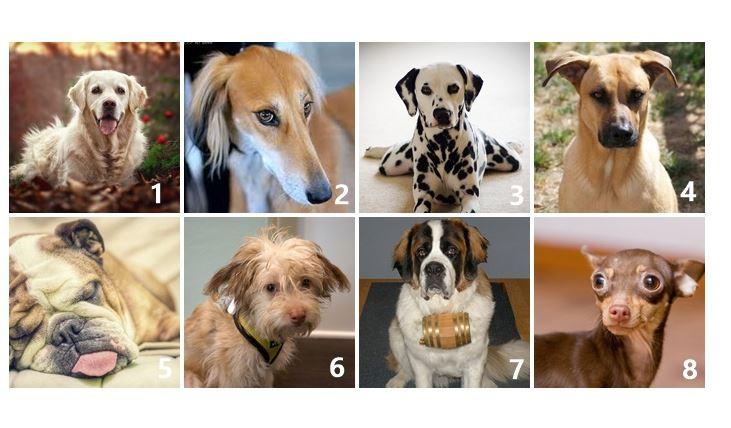 A számodra legkedvesebb kutyus segít megfejteni, hogyan is éled az életed