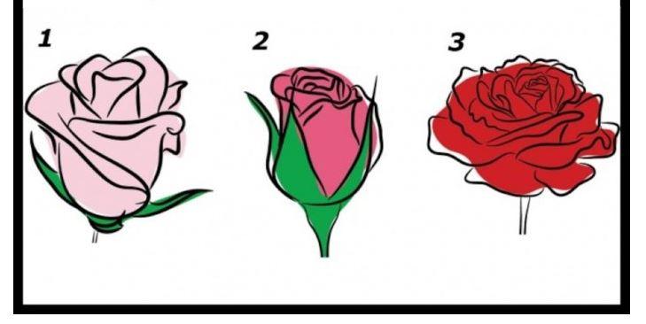 A rózsád megmutatja, miért szeretnek téged az emberek