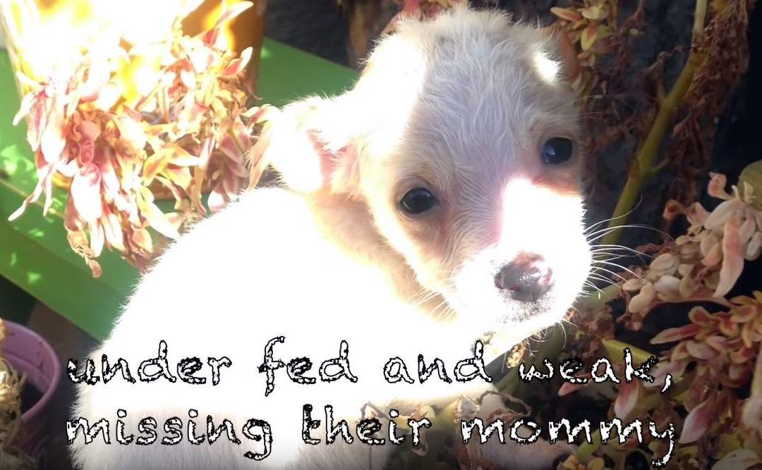 Kétségbeesett üzenet érkezik az állatvédőkhöz: az anya és a kutyakölykök élete veszélyben van – nem haboznak