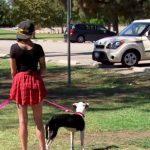 A katona hónapok óta nem látta két hűséges kutyusát: itt a pillanat, mikor kiszáll az autóból és a kutyák meglátják