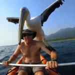 A horgász egy sérült pelikánra bukkan: kamerájával rögzíti, milyen csodás kalandokat élnek át együtt