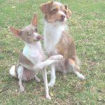 Ezek a kutyák varázslatos trükkökre képesek: alap kisfilm minden kutyabarátnak