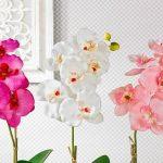Hőmérséklet, víz, fény: ezekre figyelj, ha helyesen és hatékonyan szeretnéd gondozni az orchideáidat