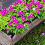 Kilenc kisigényű virág, ami mesésen széppé varázsolja kerted: bárhova ültetheted őket, öntözésre is alig van szükségük