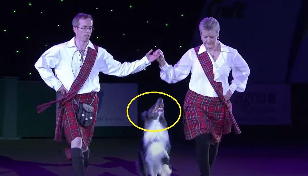 Két szédületesen tehetséges táncos lépett a közönség elé, ám a kutya fergeteges mozgásával ellopta az egész show-t