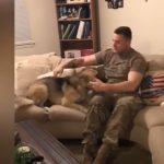 A német juhászkutya kilenc hónapja nem látta katona gazdiját: mikor felfedezi, hogy ott ül a szobában öröme fékezhetetlen