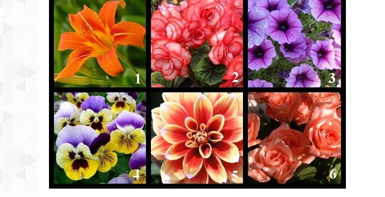 Tűzliliom, begónia, petúnia, árvácska, dália vagy rózsa? A választott virág elmondja a hölgyeknek, miért tetszenek a férfiaknak