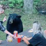 Békésen ettek-ittak, amikor megjelent egy medve és leült hozzájuk: videó rögzítette, milyen felelőtlenek voltak a piknikezők