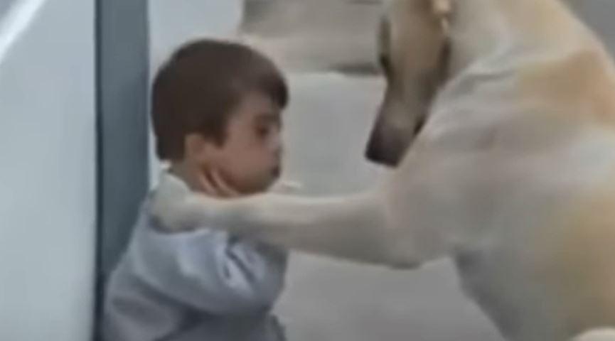 A kutyus odamegy a Down-szindromás kisfiúhoz: ez a kisfilm bemutatja, milyen kivételesen okos és jólelkű tud lenni egy állat
