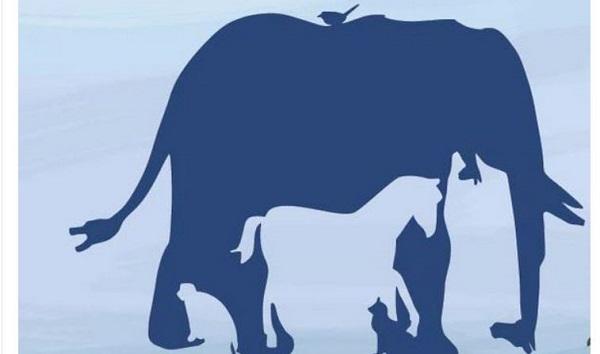 Hány állatot fedezel fel az ábrán? Ha 6-nál többet, akkor kiemelkedő a vizuális intelligenciád: