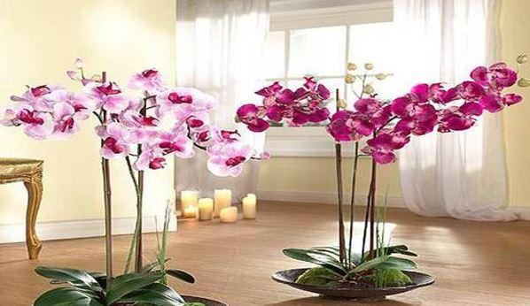 2 nagyon fontos szabály van az orchidea gondozásával kapcsolatban: ezeket kell betartani és a növény gyönyörűen virul majd